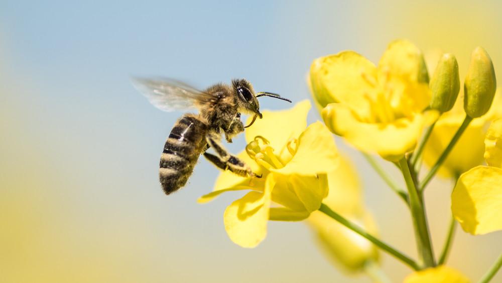 Fontos figyelmeztetés: ezek az első lépések a méhek védelmében