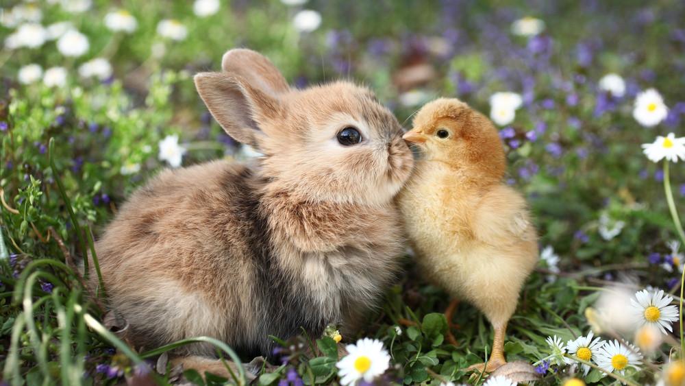 NyusziSTOP: ezért ne vásárolj állatot húsvétra