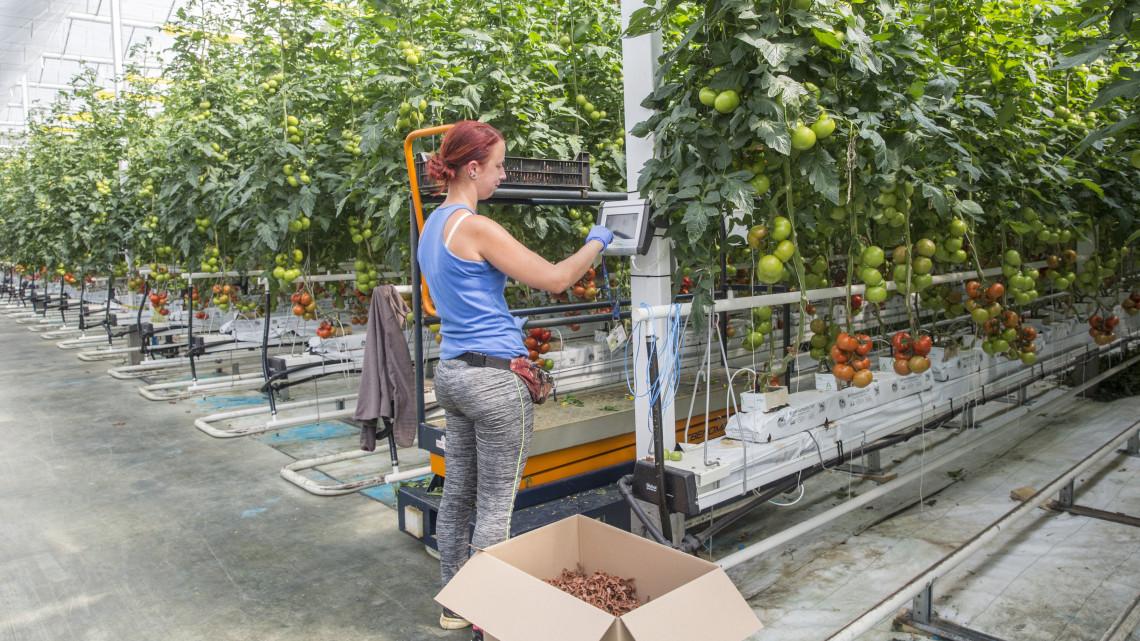 120 milliárd forintból támogatják a kertészeti beruházásokat