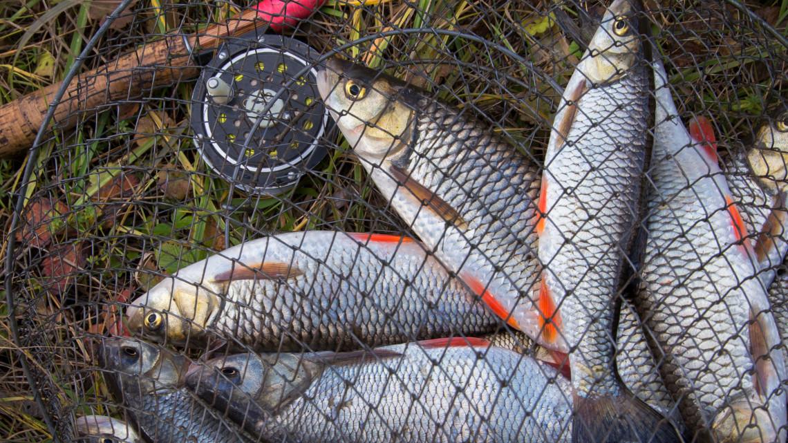 Milliárdok halászatra: közel tíz százalékkal ugrott meg a támogatás mértéke