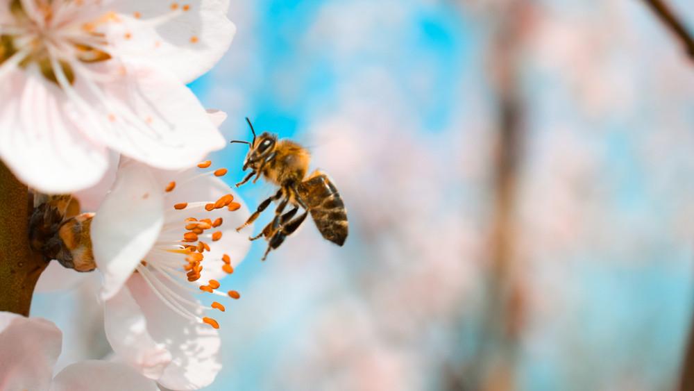 Termelők, figyelem: idén is ellenőrzik a méhvédelmi előírások betartását