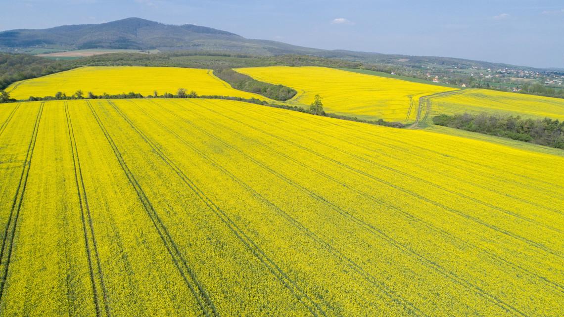 Válasz az aszályra: úgy mentenék a gazdák a termést, hogy mindenen spórolnak