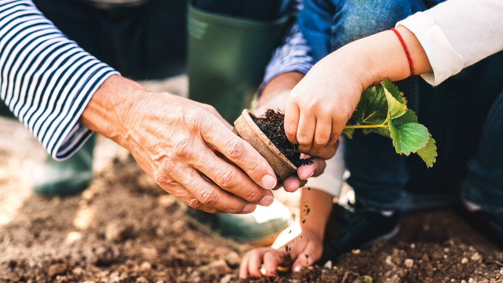 Házimunka, kertészkedés: ez lenne a hosszú élet titka?