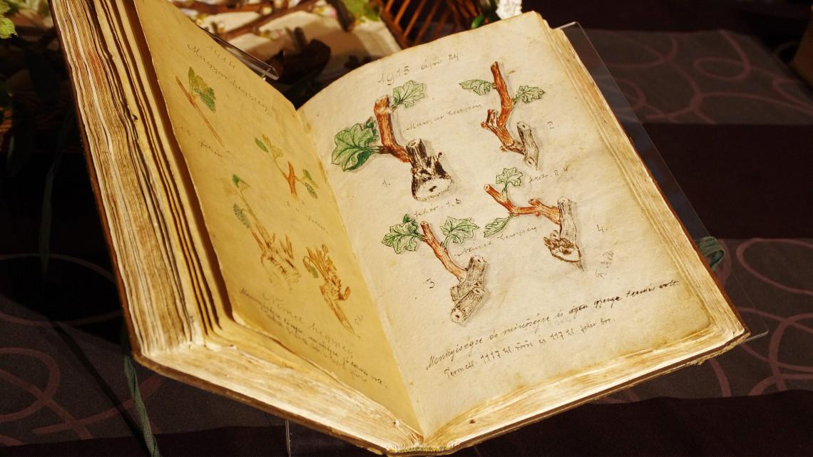 Borverseny és hagyomány: idén is kinyílik a kőszegi kódex