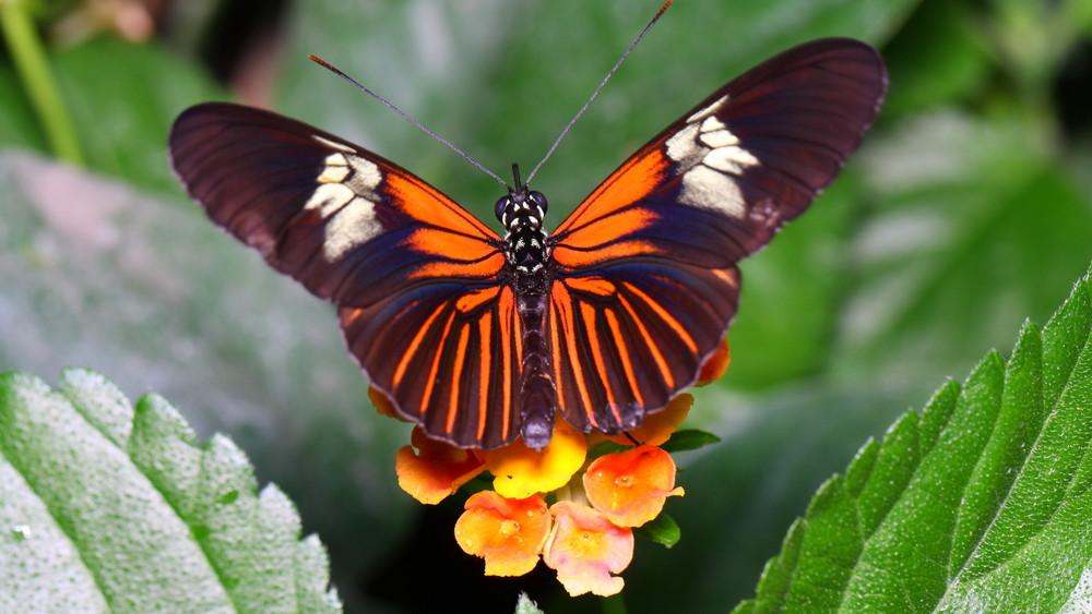 Irány Szeged: négyszáz színpompás, trópusi pillangóban gyönyörködhetünk