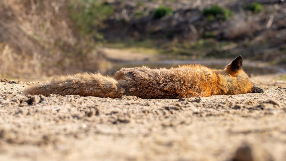 Felháborító: mérgezés miatt védett állatok pusztultak el Tolnában