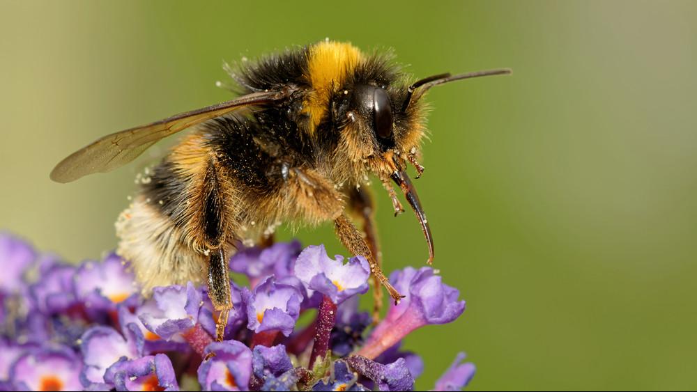 Nagy erőkkel nyomoz a Nébih: még nem tudják, mi okozta a nyári méhpusztulást