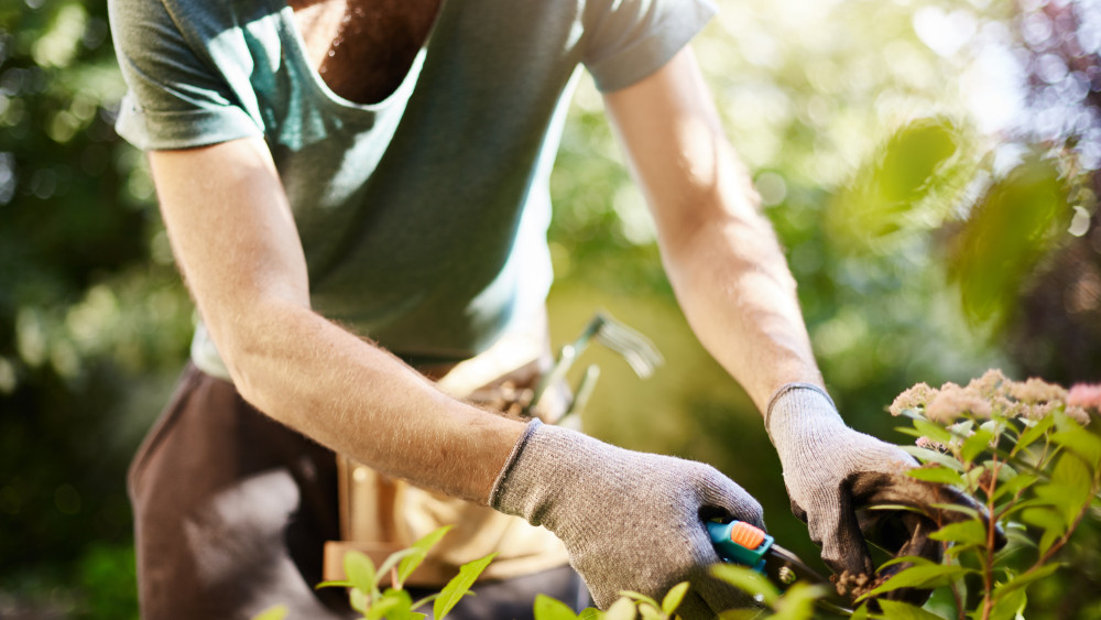 Népbetegség gyógymódja rejtőzik a magyar kertekben: ilyen egyszerű lenne?