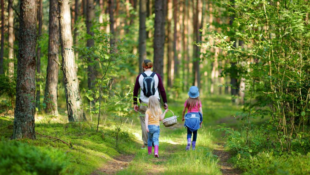 Kirándulók rémálma: életveszélyes lehet, ha eltévedünk az erdőben