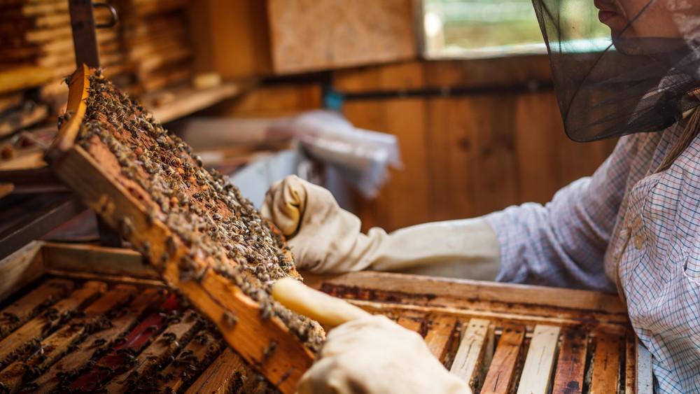 Rekordméretű támogatást kapnak idén a méhészek