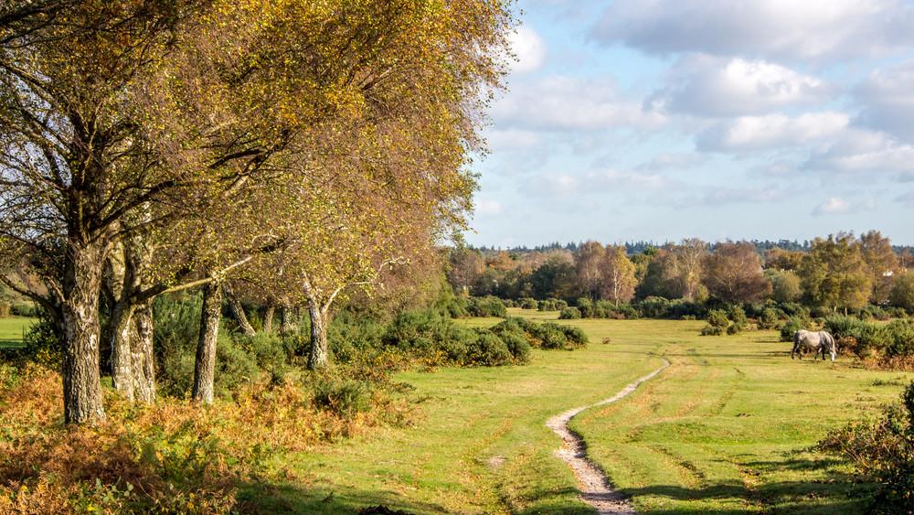 Egymillió új csemetét ültetettek Pest és Nógrád megyében