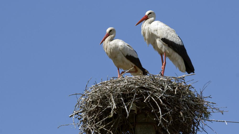 Szomorú: ennyi madár pusztult el tavaly áramütéstől