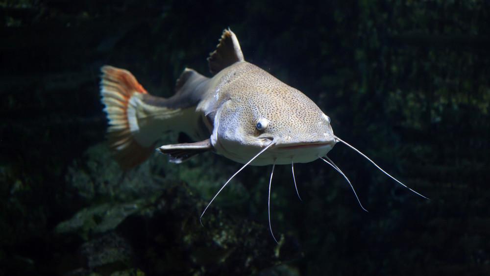 Jól nézd meg, mi akad a horogra: újabb horgászati tilalmat hirdetett a Nébih