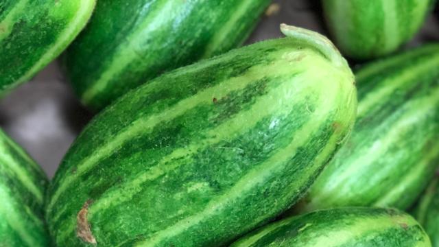 Új zöldség kerülhet a magyar boltokba: így néz ki a dinnyeuborka