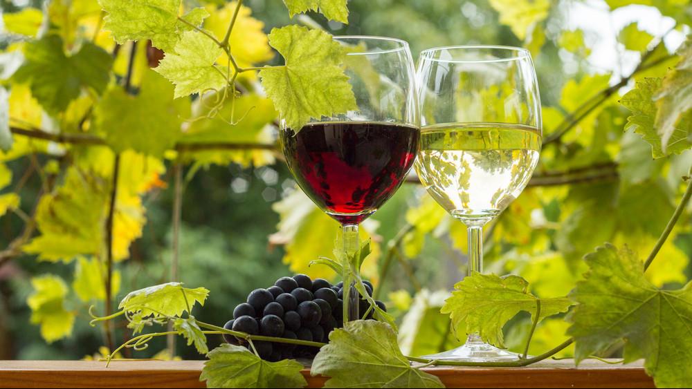 Véget érhet az aszú egyeduralma: legendás vörösbor készül Tokajban