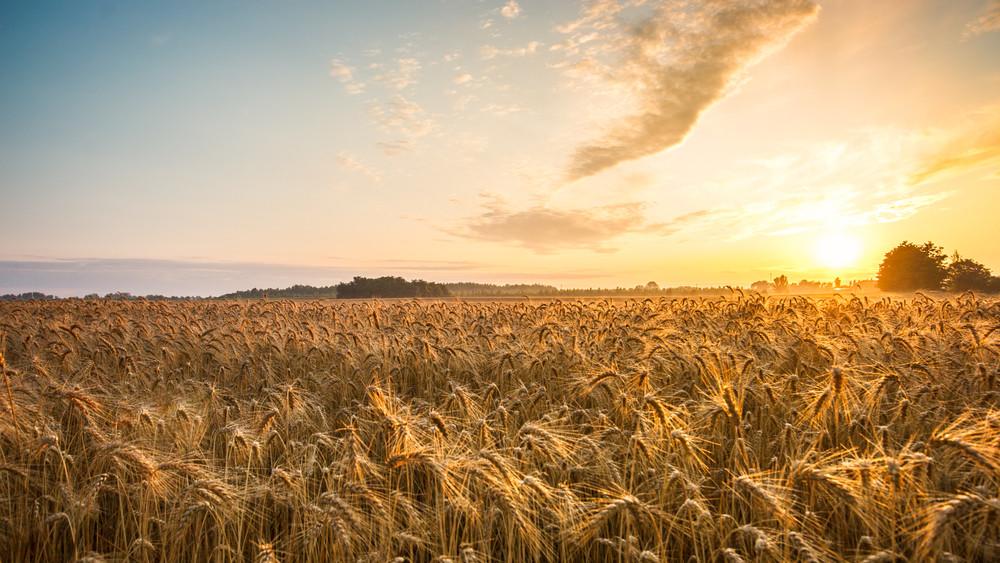 Jó hír a gazdáknak: díjmentesen öntözhetnek a földeken
