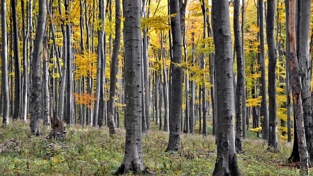 Eltűnt az ország egyik legidősebb erdője a Bükkben