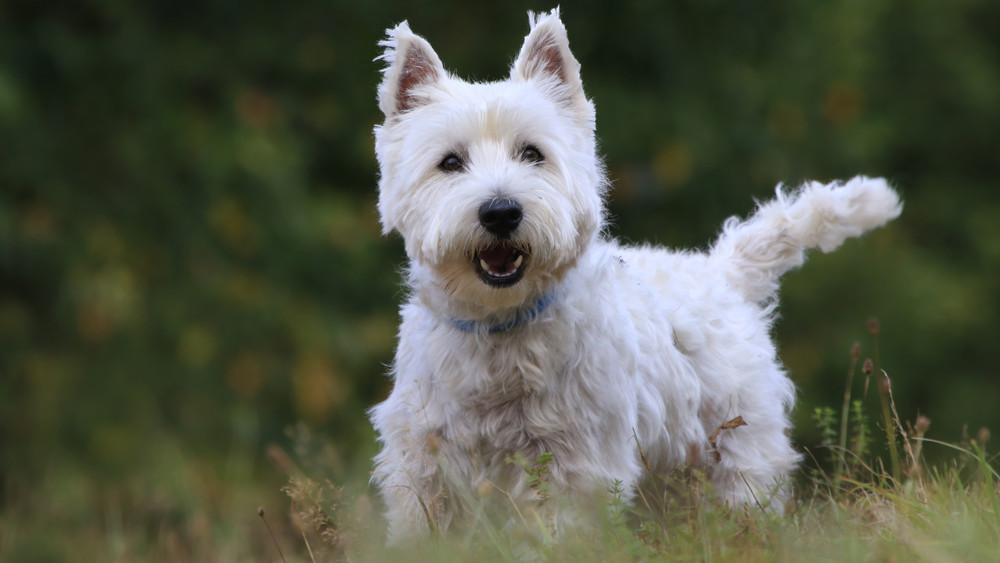 Ez az 5 legbarátságosabb és legkommunikatívabb kutyafajta