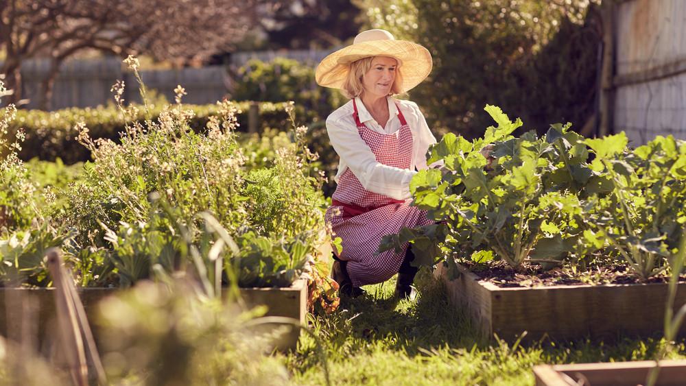 Na ezért érdemes magaságyásban veteményezni: még a legkisebb kertekben is