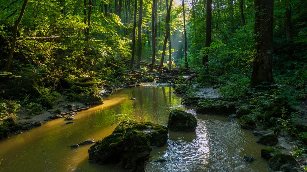 Új magyar filmsorozat indul: akcióban a természet őrzői