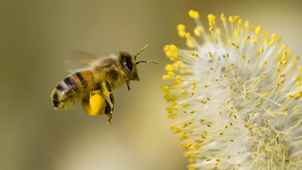 Drasztikusan lecsökkent a méhek száma: elbúcsúzhatunk a méztől?