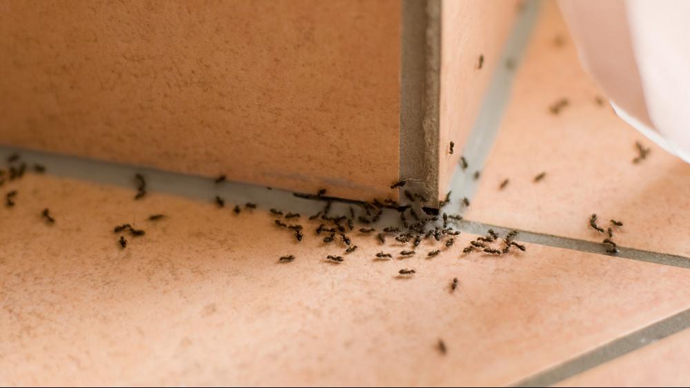 13 tuti tipp, amivel örökre száműzheted a hangyákat az otthonodból
