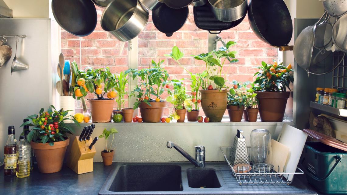 8 strapabíró, beltéri zöldség: így varázsolj kertet a konyhádból