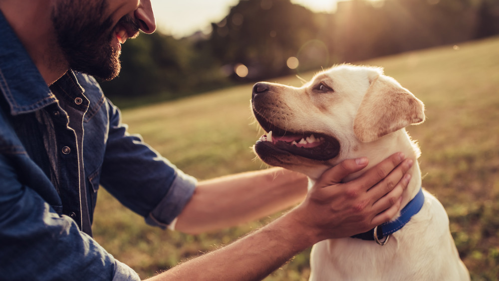 Meglepő dolog derült ki: ezt eddig biztos nem tudtad a kutyádról