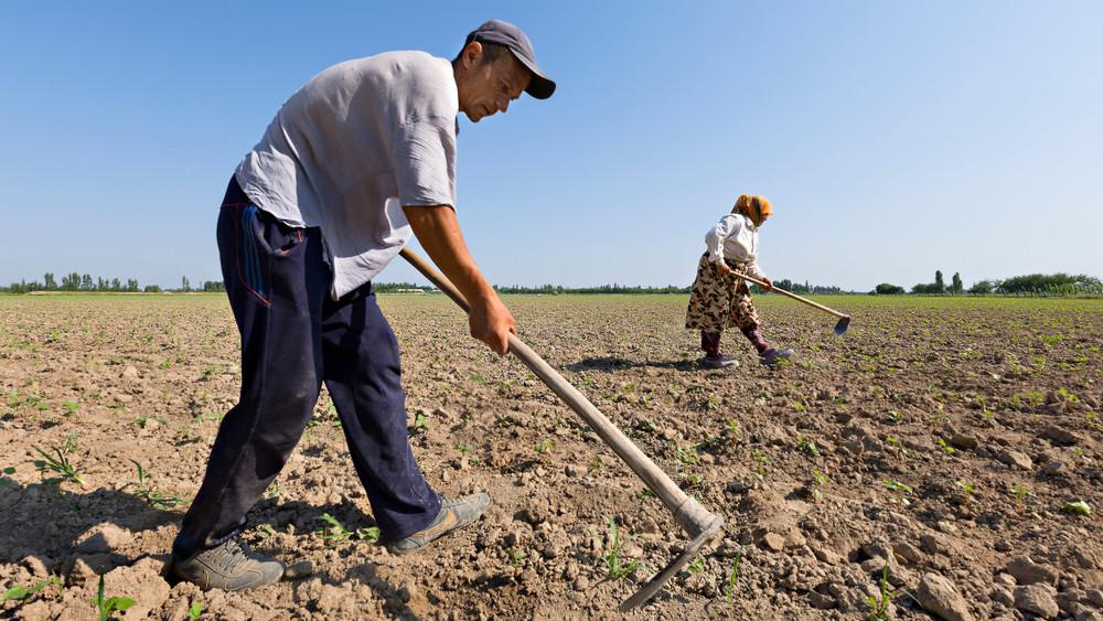 20 millió európait etethetne a magyar agrárium: ez kell hozzá