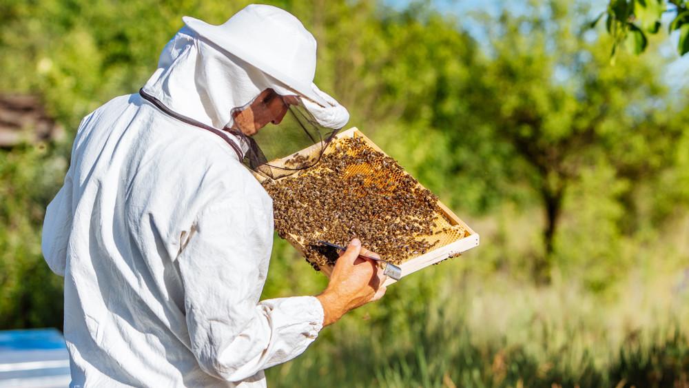 Veszélyben a magyar akácméz: nem bírnak a méhészek a szeszélyes időjárással