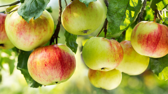 Megreformálják a meggy- és almapiacot: szigorú szabály lépett érvénybe