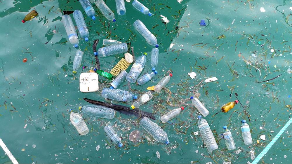Mikroműanyag para: még nem jelent veszélyt az édesvízi halakra