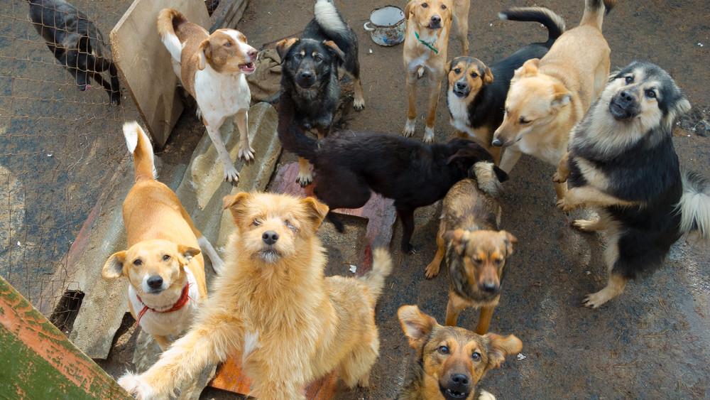 Idén lesz a nagy kutyaszámlálás: figyelem, a mikrocsip kötelező!