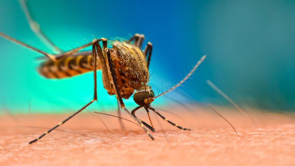 Jön a szúnyoginvázió: ezeken a területeken irtják a vérszívókat