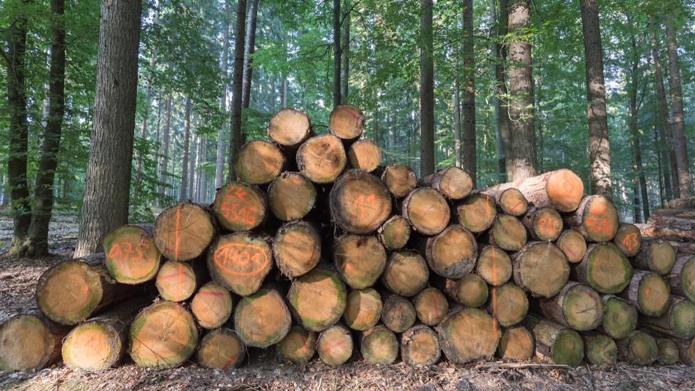 Egyre keményebb az ellenőrzés: nem éri meg fát lopni