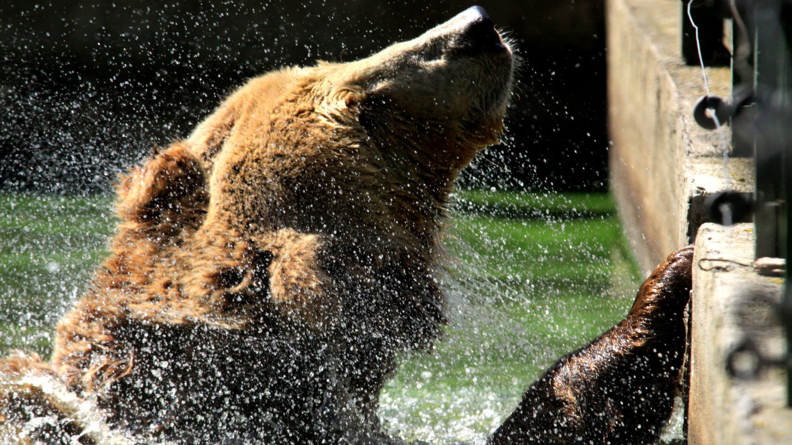 Jól jártak a medvék és az oroszlánok: megújult a veszprémi állatkert
