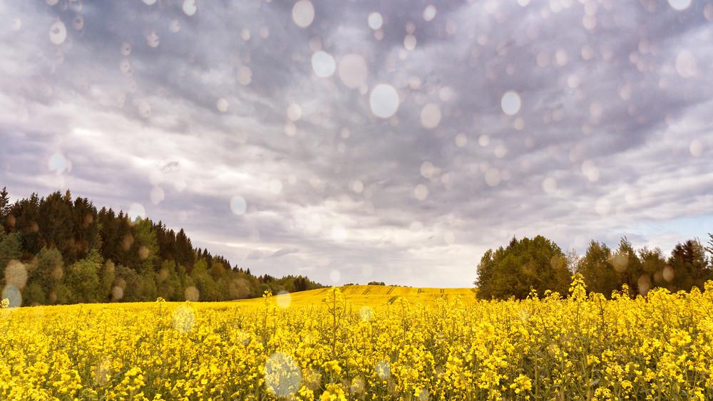 A májusi eső aranyat ér: reménykedhetnek a gazdák