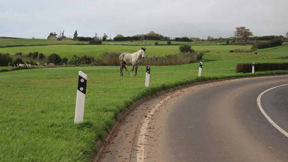 Megvan a tettes: eljárás indult az M7-esen elszabadult lovak gazdája ellen