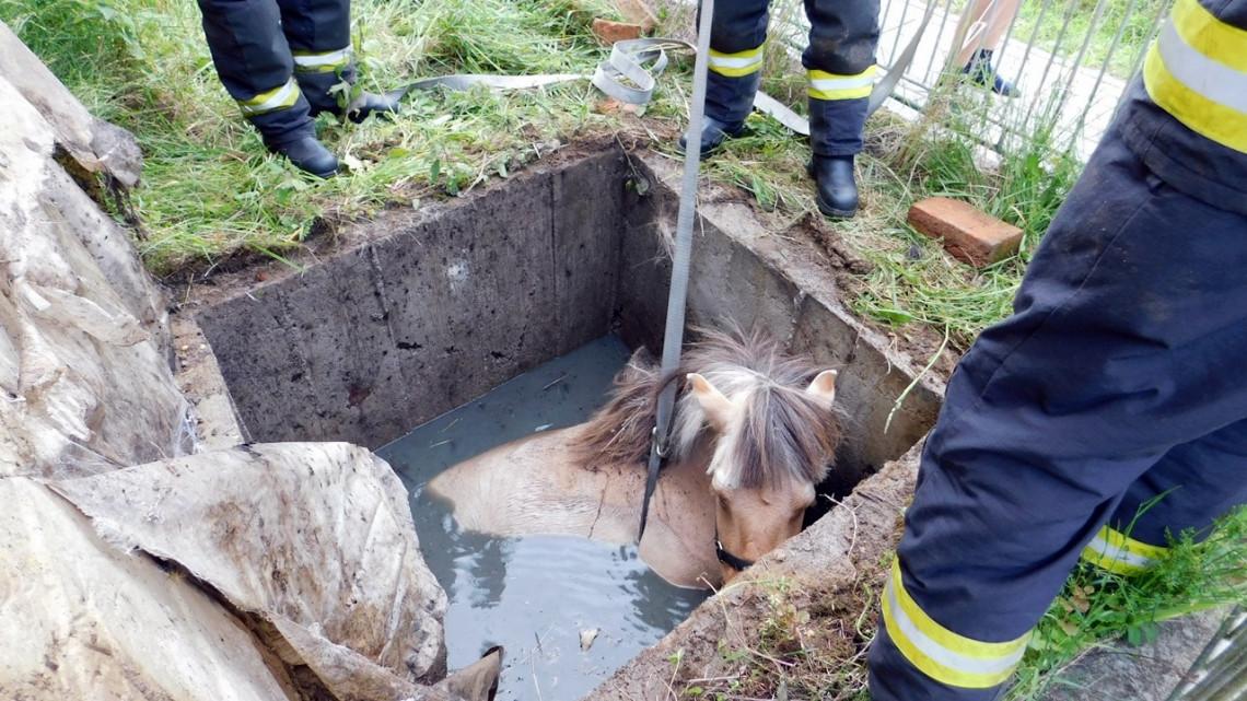 Vízaknába esett egy ló Zala megyében: fotókon a mentés