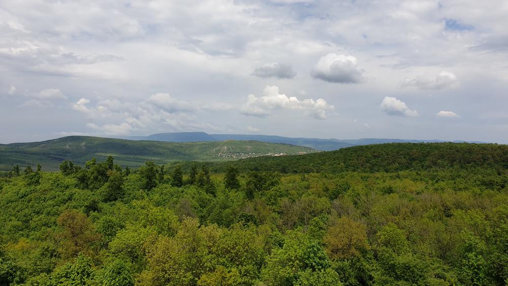Természetvédelemre szólítanak fel az erdőgazdaságok: játszva tanítanák a gyerekeket
