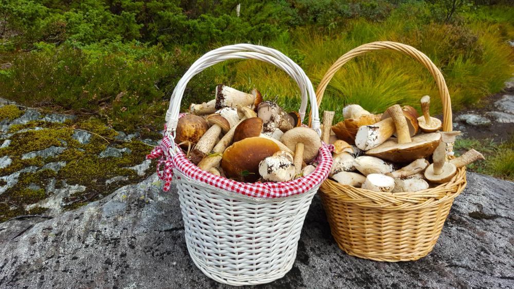 Új előírás élesedett a magyar erdőkben: ezt minden gyűjtőnek tudnia kell!