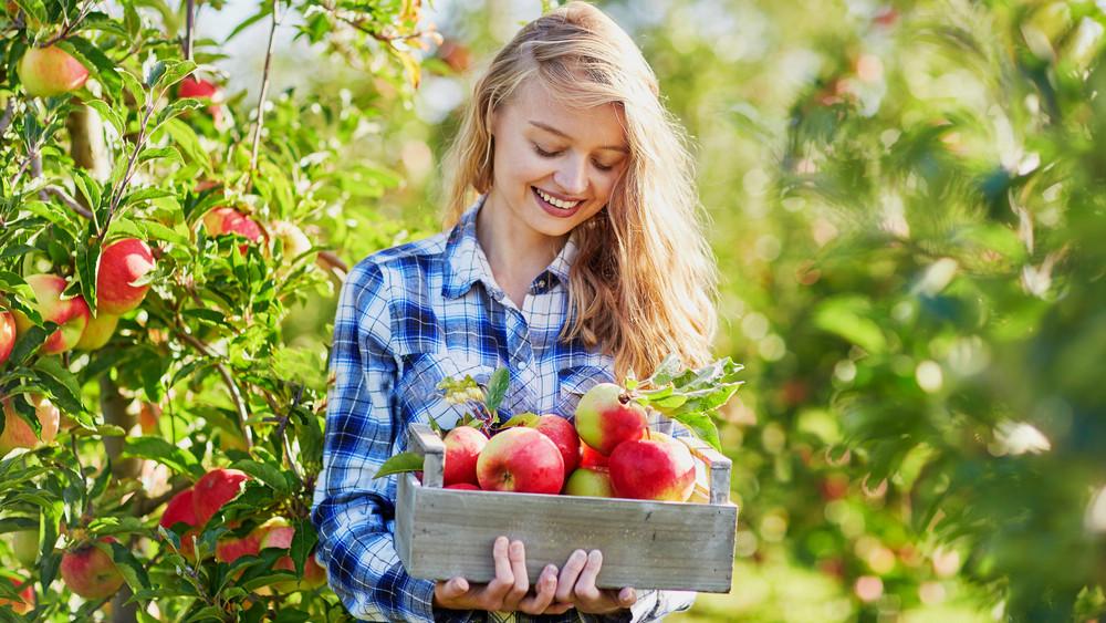 Ilyen könnyen tudsz magról nevelni gyümölcsfát - itt a titok!