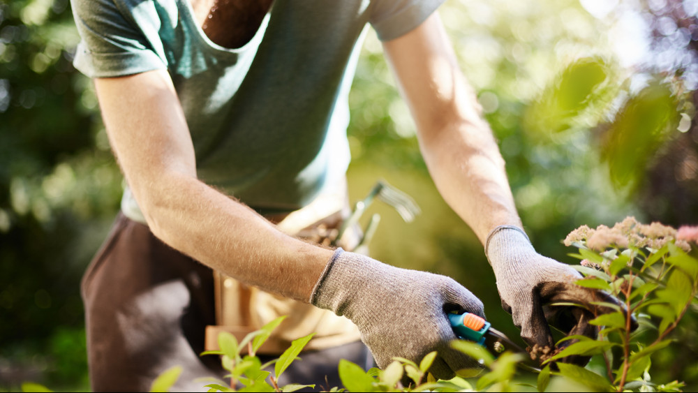 Ezeket a kerti munkákat mindenképp végezd el júniusban: itt a nyár eleji feladatlista