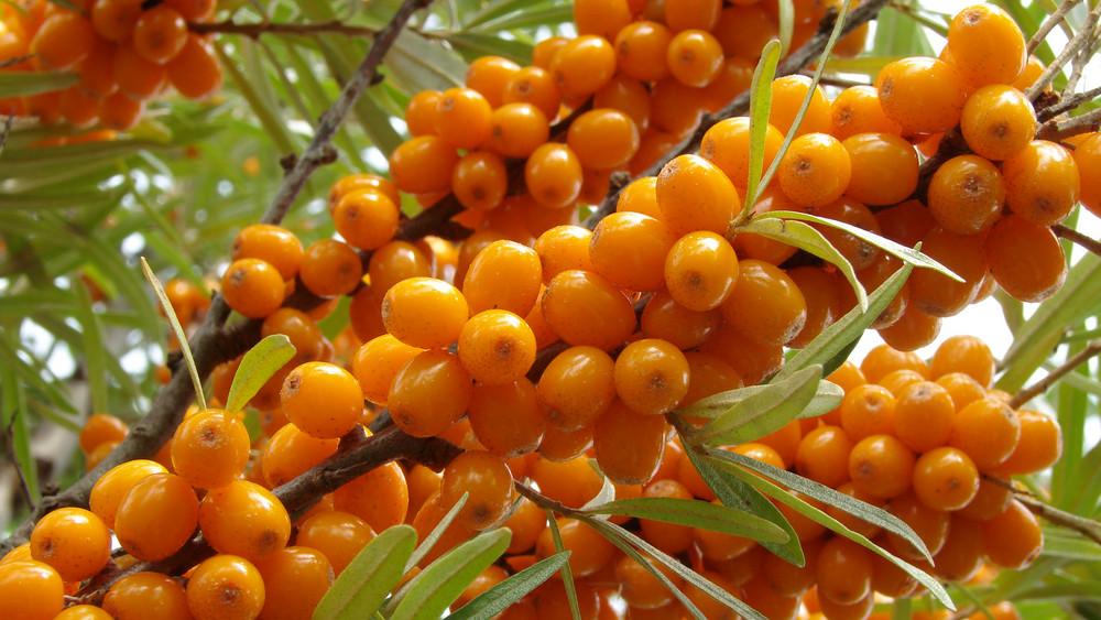 Igazi vitaminbomba: ez a természetes csodaszer a legtöbb betegségtől megvéd