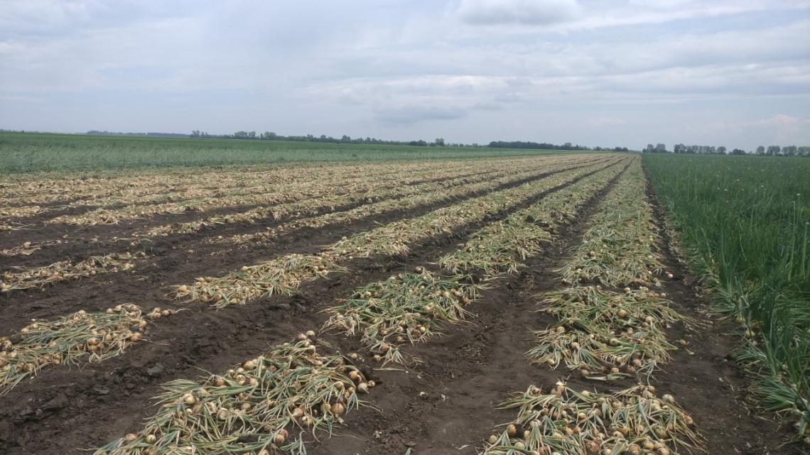 Újra piacon a hazai áru: ismét kapható a magyar termény
