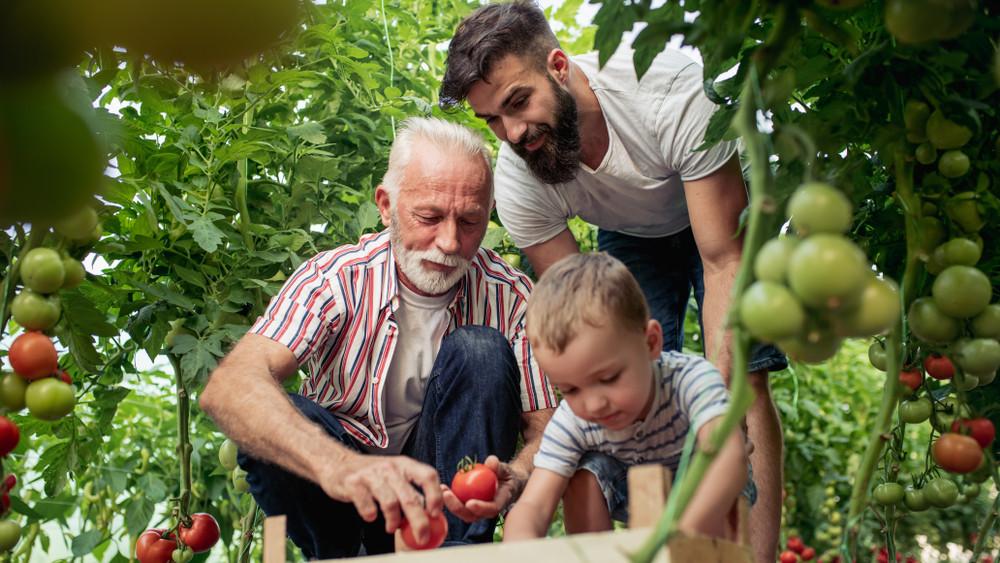 Így lehet továbbra is sikeres a családi cég: a generációváltás stratégiája