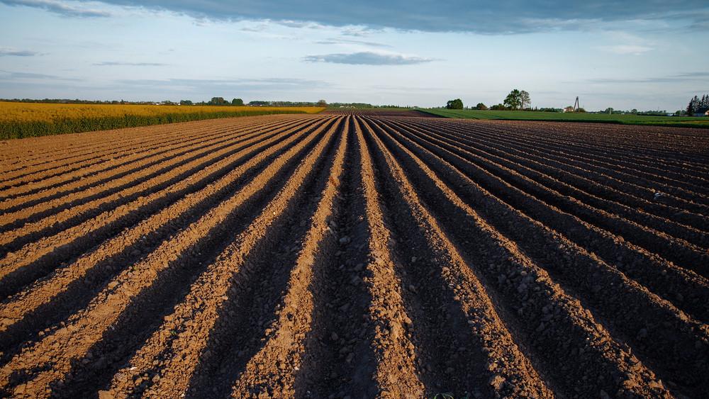 Összefoglaló a magyar gabonaágazatról: változhat a támogatási rendszer
