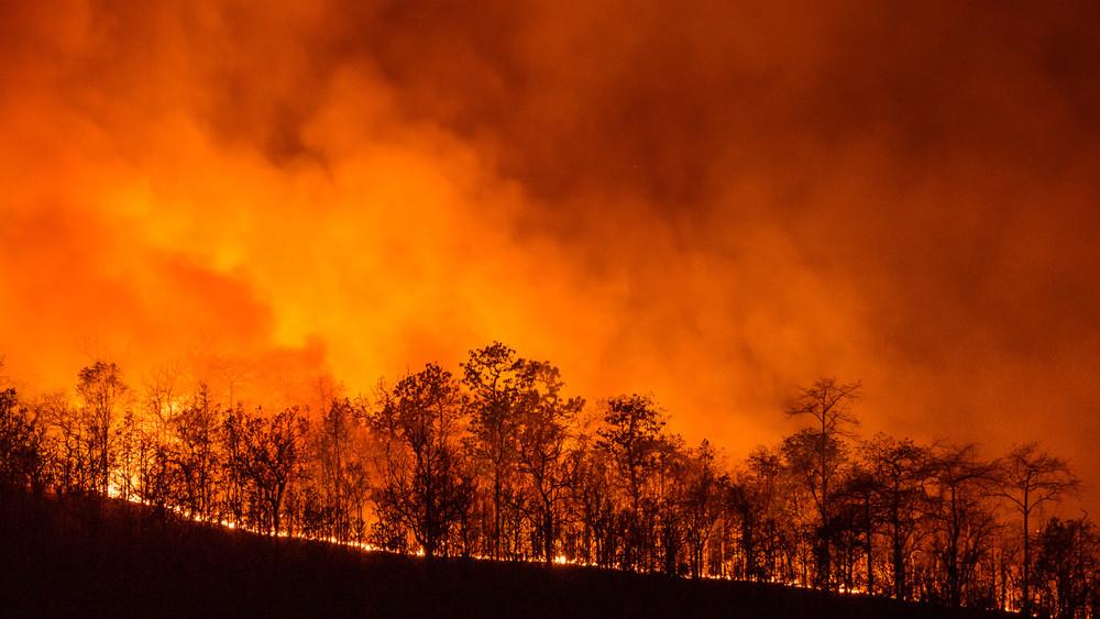 Féltik az erdőket: ezekben a megyékben van tűzgyújtási tilalom