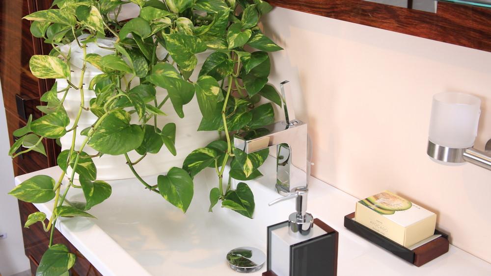 Nagyon nem mindegy, hova, milyen szobanövényt raksz: ezt jobb, ha tudod