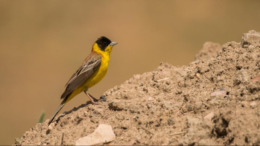 Itt a bizonyíték a klímaváltozásra: egzotikus madarak bukkantak fel az Alföldön